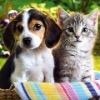 Seadog and Cat
