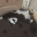 KITTY CAT  BOY